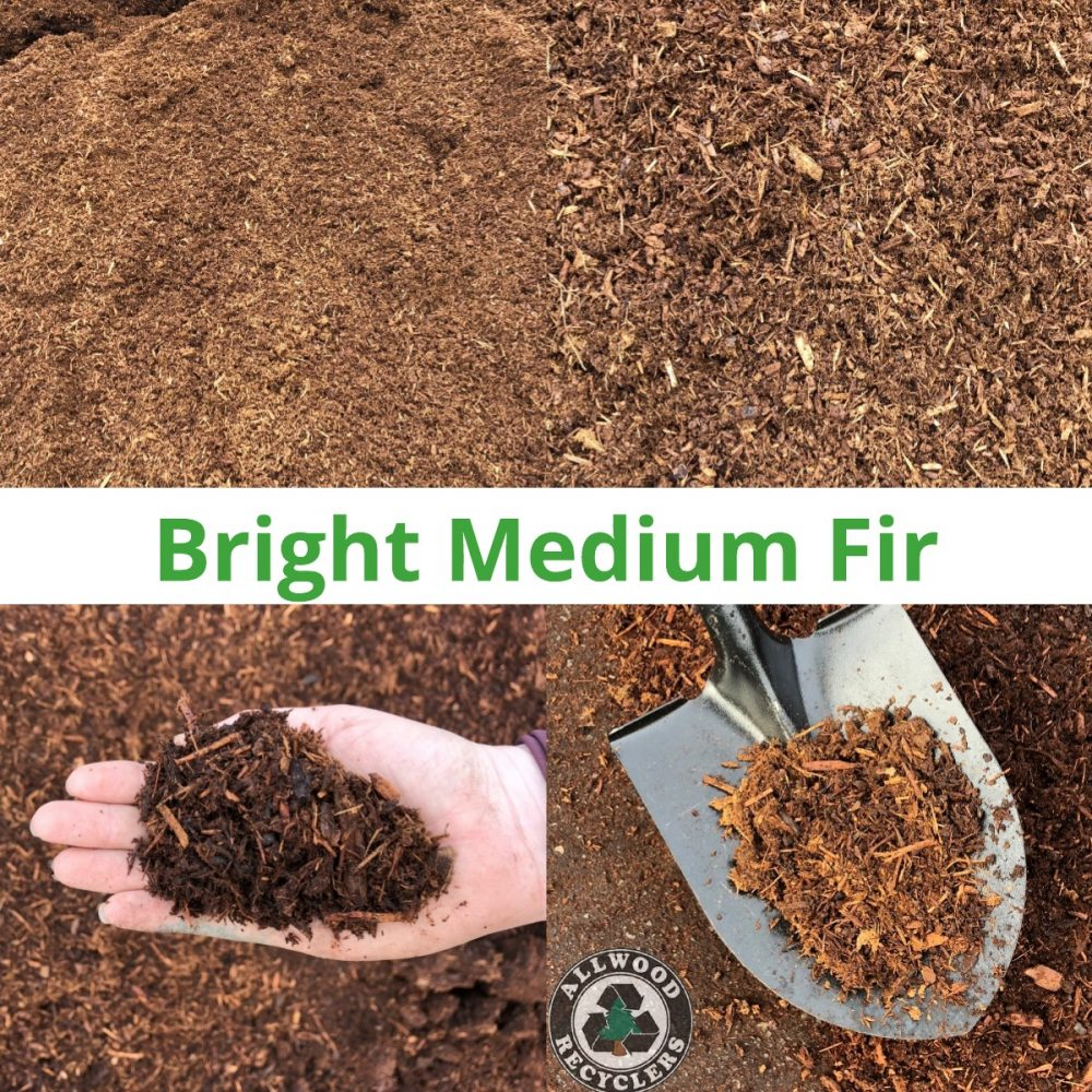 Bright Medium Fir