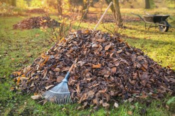 Yard Waste Removal Milwaukie