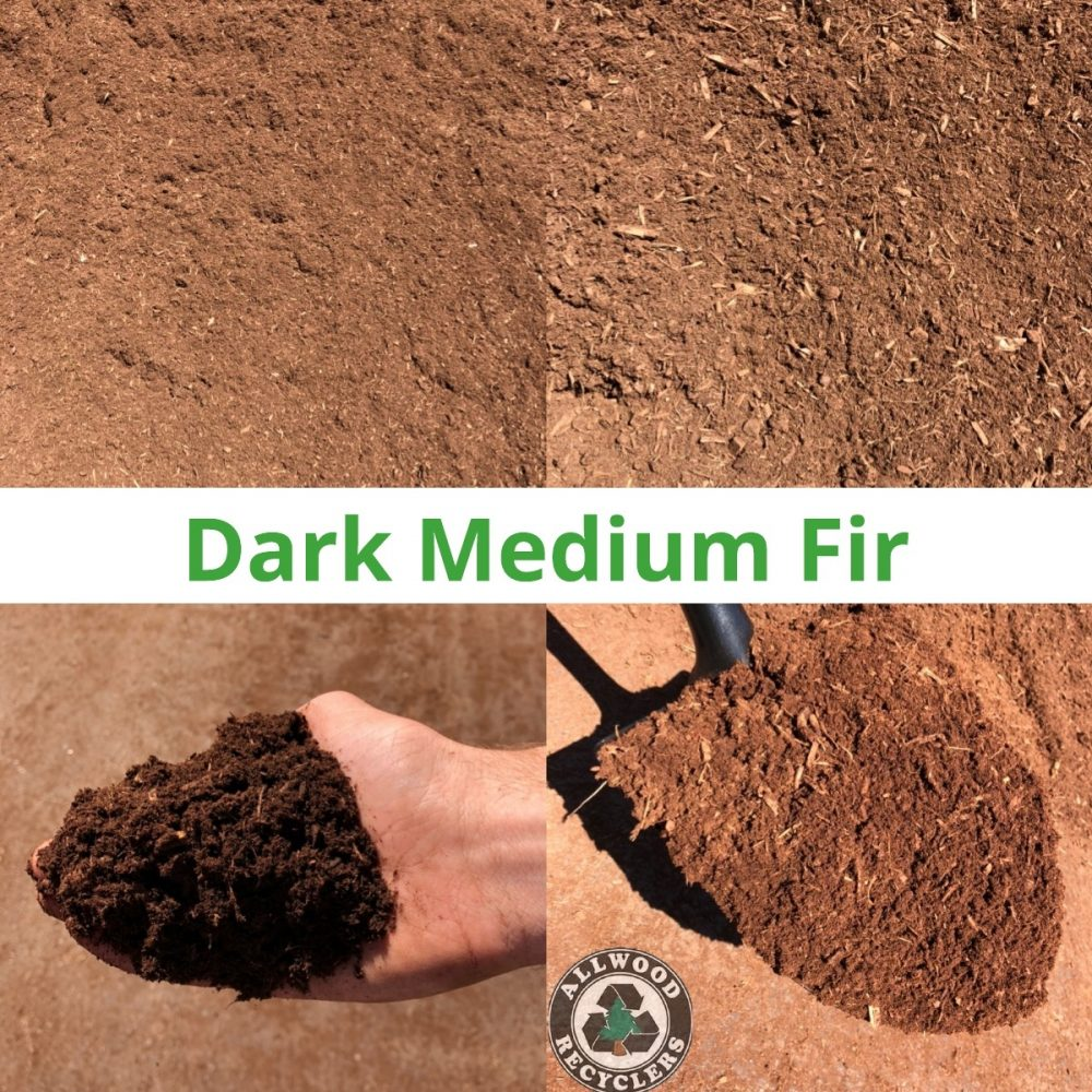 Dark Medium Fir