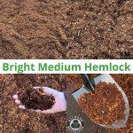 Bright Medium Hemlock